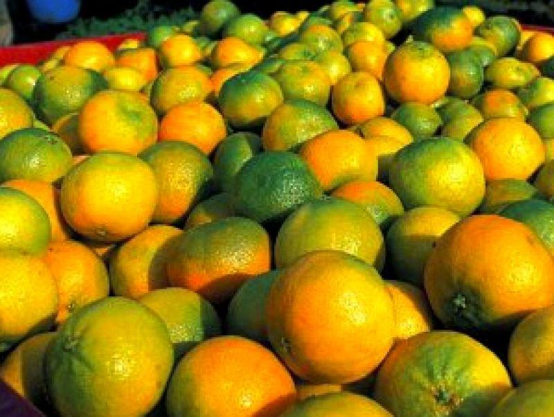 Foto gentilmente concessa dall'archivio della fondazione www.qualivita.it