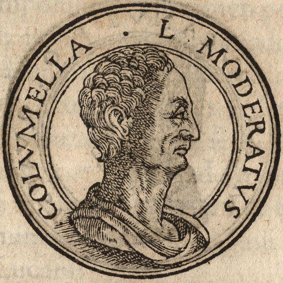 Lucio Giunio Moderato Columella (I sec d.C.)