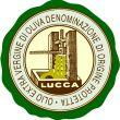 Extravergine di oliva Lucca DOP