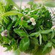 Gastrosofia tradizione delle erbe di campo